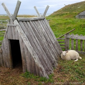 Sheep hut at Norstead