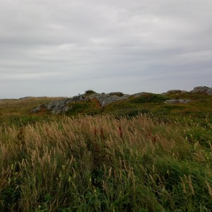L'Anse aux Meadows vista