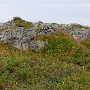 Rocks at L'Anse aux Meadows